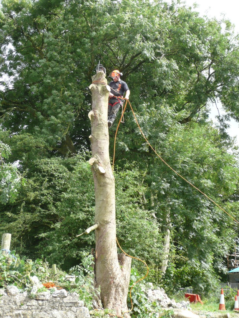 Mark Cleary cutting the large popular tree to allow for ESB Pole